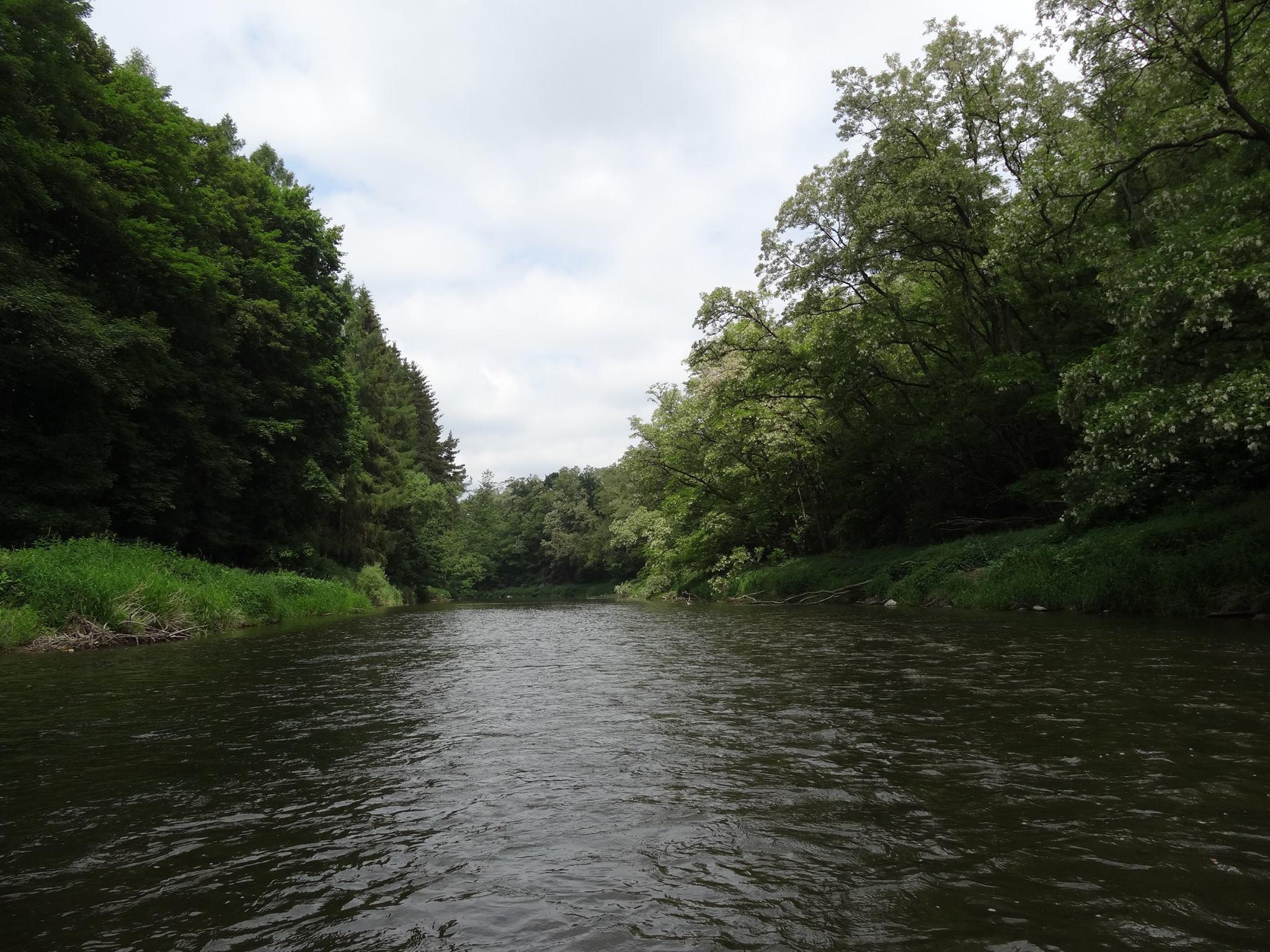 green water nature sazava czech canoe